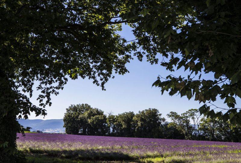 """""""Journée Émotions"""" : Découvrez l'essentiel de la Drôme Provençale à Pierrelatte - 0"""
